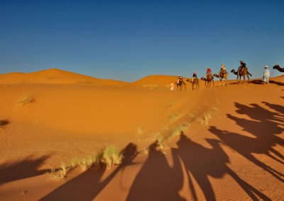 Shadow Of Camels In Merzouga Desert, Morocco