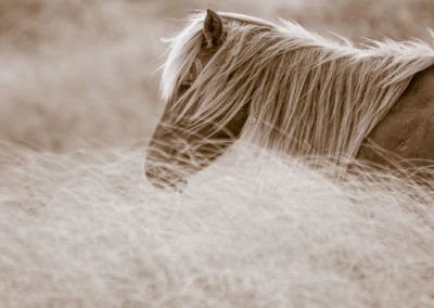 13 Photo Workshop Adventures Wild Horses Of North Carolina Michael Cohen